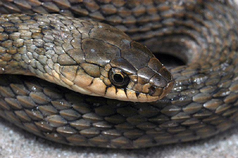 They're Back: Supposedly Extinct Sea Snakes Have Been ... |Snake Like Water Animals